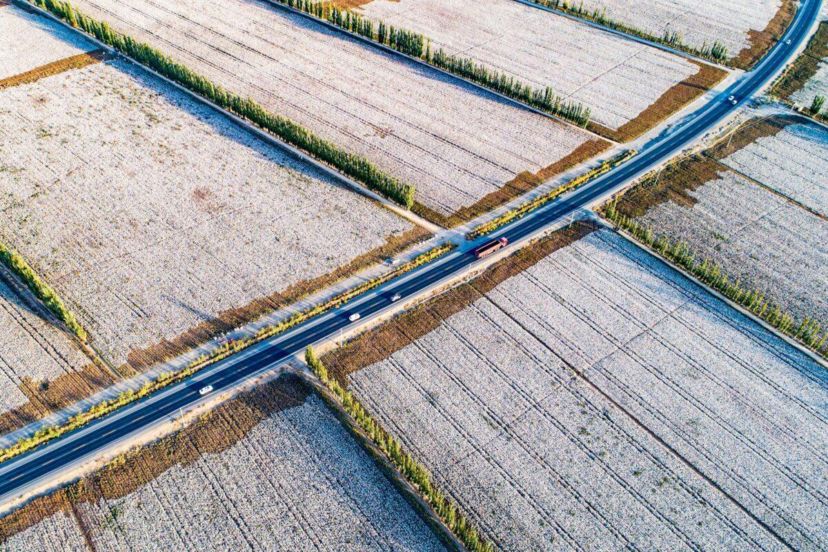 cotton fields in Xinjiang