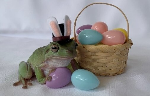The winner of Cadbury's annual Easter Bunny hunt was Betty, a tree frog from Florida. (Courtesy of The Hershey Co.)