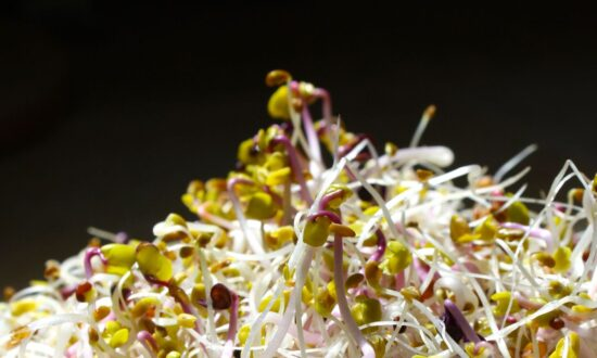 Sprouts: A Radiant Shift in Nutrition