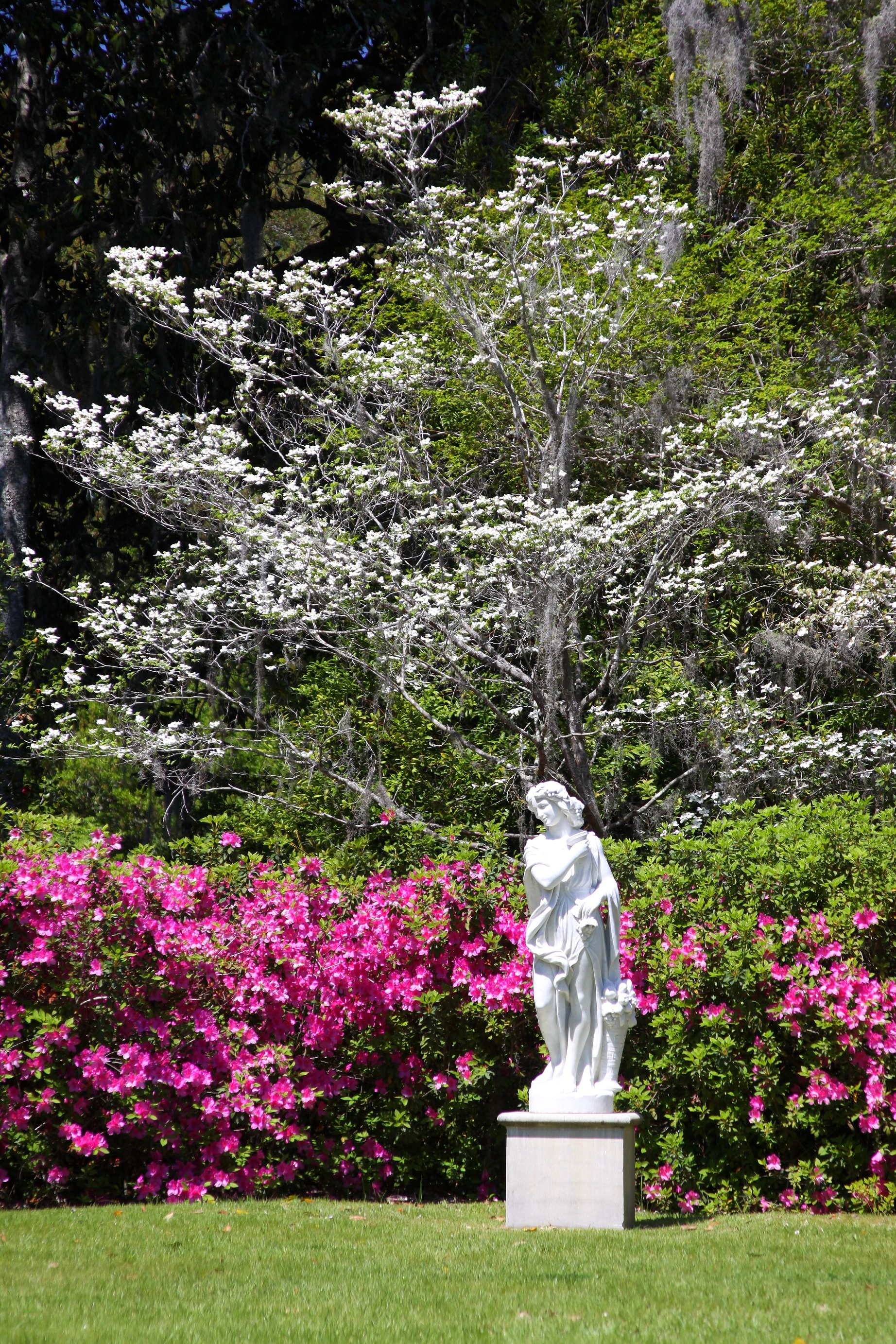 Middleton Place - Secret Garden in Spring with Azaleas - Vertical