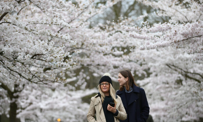 Women walk among blossoming trees in Battersea Park in London, on March 28, 2021. (Hollie Adams/Getty Images)
