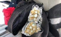Border Patrol K-9 Sniffs Out $60,000 Worth of Fentanyl Inside Burritos