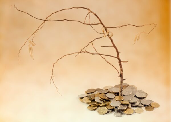 money tree