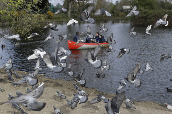 Pigeons fly as a family enjoy a boating lake