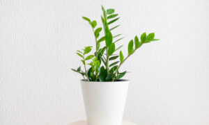 Why Houseplants Turn Brown and How to Stop It