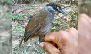 Long-Lost Bird Spotted in Indonesia for the First Time in 170 Years