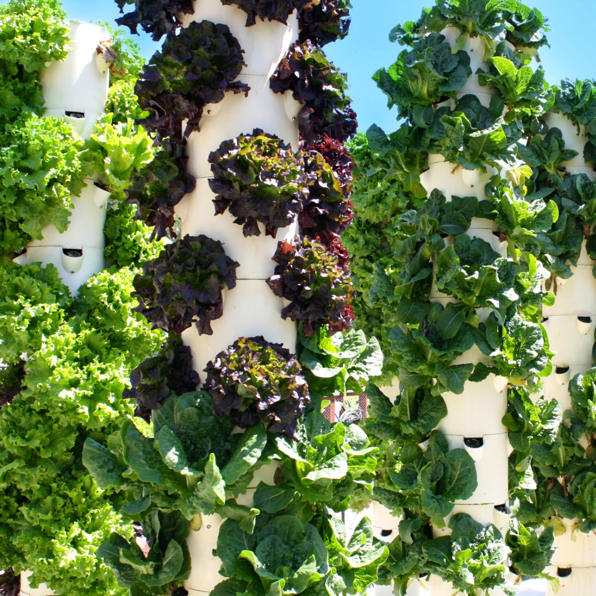 Vertical aeroponic systems are versatile, scalable, suitable for crowded, city apartments or suburban settings. (Jeff Perkins)