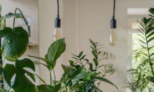 Edibles You Can Easily Add to Your Garden