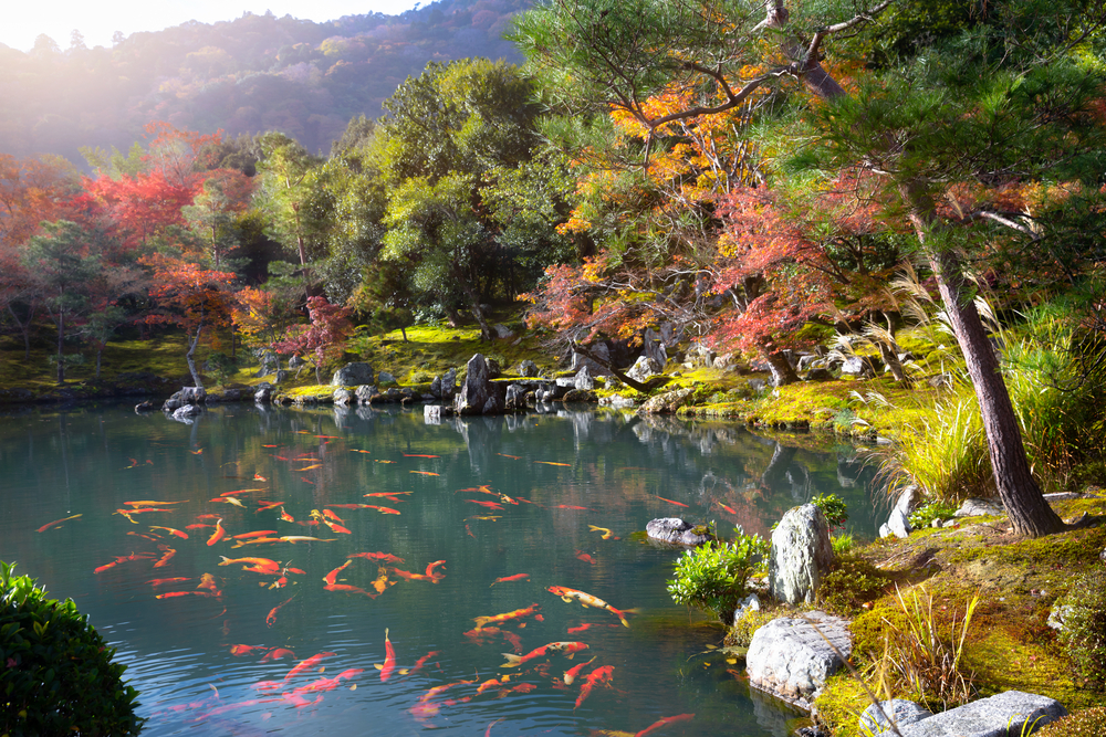 Zen,Garden,Of,The,Tenryu-ji,Temple,,Arashiyama,Kyoto,Japan