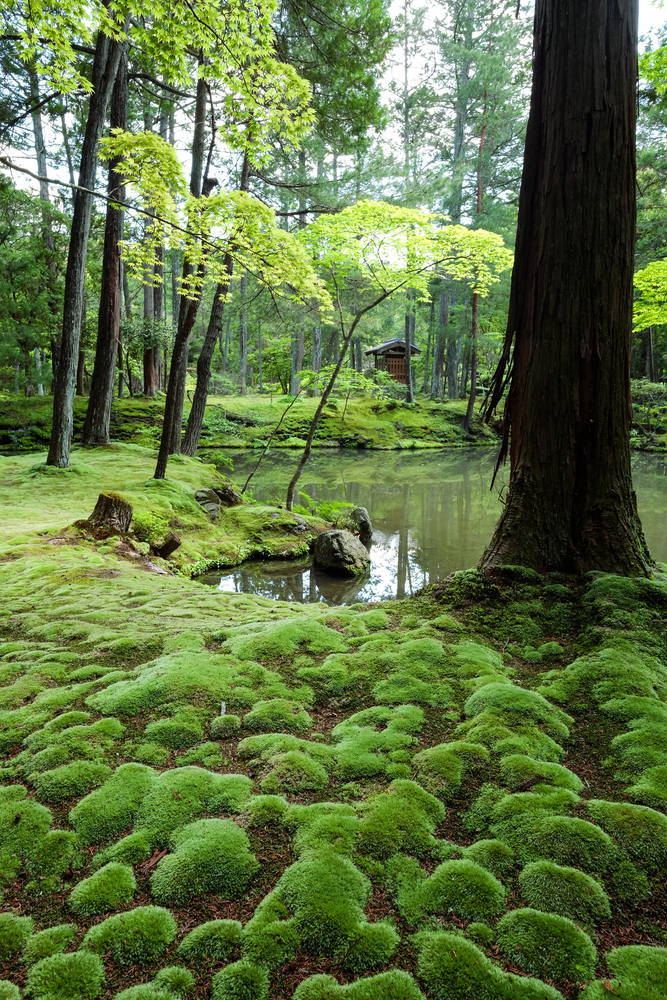 Saiho-ji,Or,Koke-dera,(moss,Temple),Was,Listed,On,The,Unesco