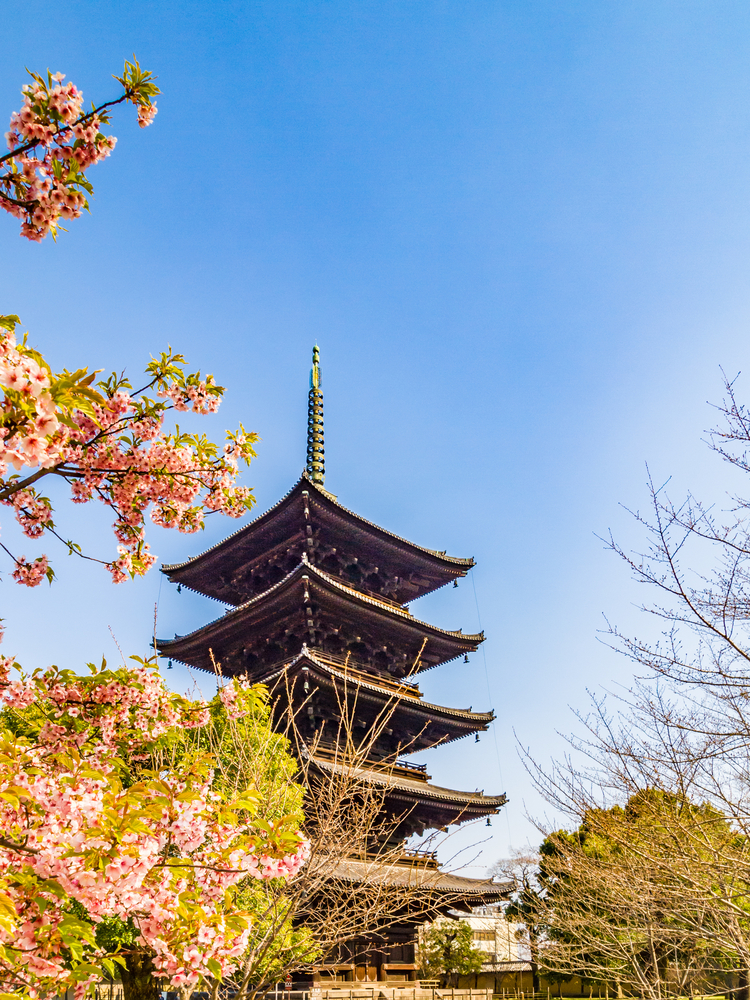 Five-storied,Pagoda,And,Cherry,Blossoms,,To-ji,Temple,,Kyoto,,Japan