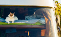 Ask the Vet: Protect Cats Traveling in a Motor Home