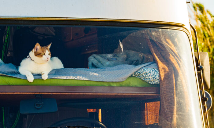 Your family can make this work, but only if the cats are amenable. (Anetlanda/Shutterstock)