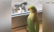 Parrots and Friends