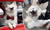 Blind Dog With Cleft Palate Appears to Have 2 Noses But It Doesn't Stop Him From Smiling