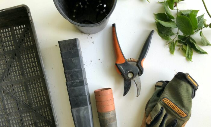 Gloves are a necessity, to protect your hands while gardening, esp when pruning with shears. (ecowarriorprincess/Unsplash)