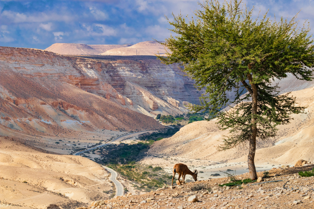 The,Negev,Is,A,Desert,And,Semidesert,Region,Of,Southern
