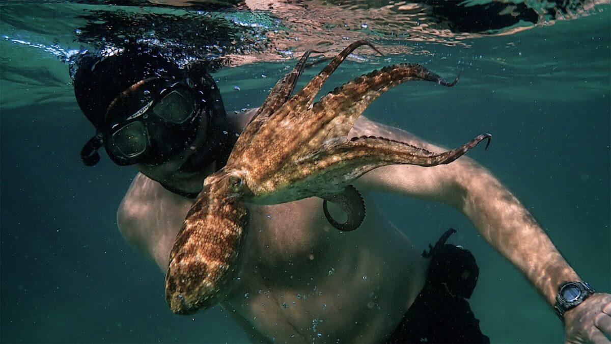 "man and octopus swim in Filmmaker Craig Foster in ""My Octopus Teacher."""
