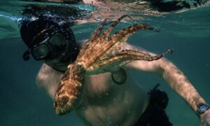 Film Review: 'My Octopus Teacher': A Love Letter to the Perfection of Nature