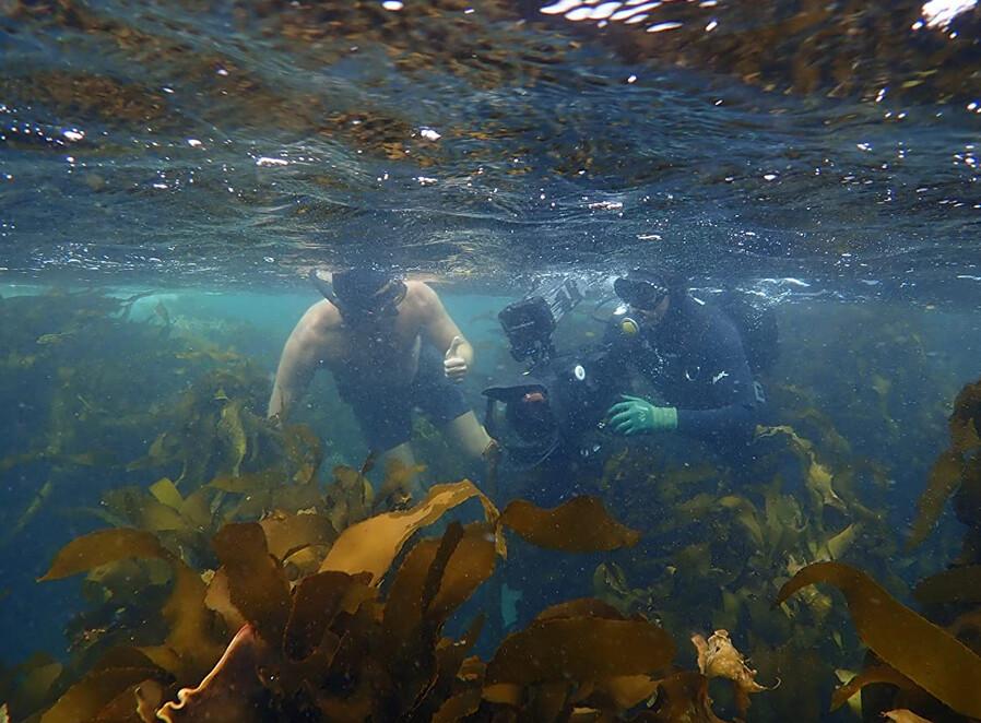 divers in kelp bed in My Octopus Teacher