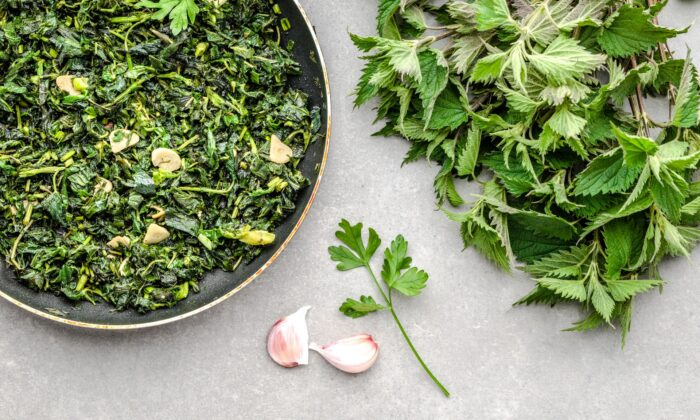 Foraged stinging nettles (Urtica dioica) star in many traditional springtime dishes, from soups and stews to sauces and sautées. (alicja neumiler/shutterstock)