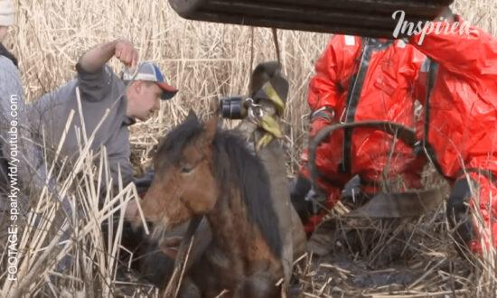 Dramatic Horse Rescue