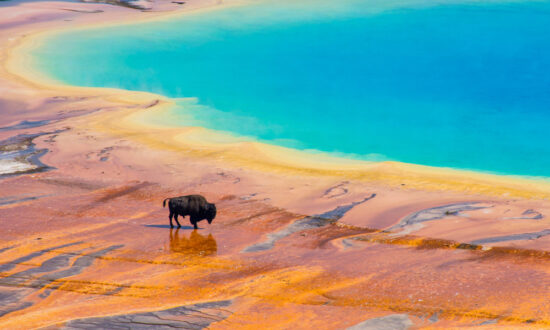 Backyard Adventures: Yellowstone National Park in the Time of COVID