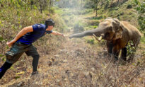 31-Year-Old Elephant Recognizes Vet Who Rescued Him From Close Death 12 Years Ago