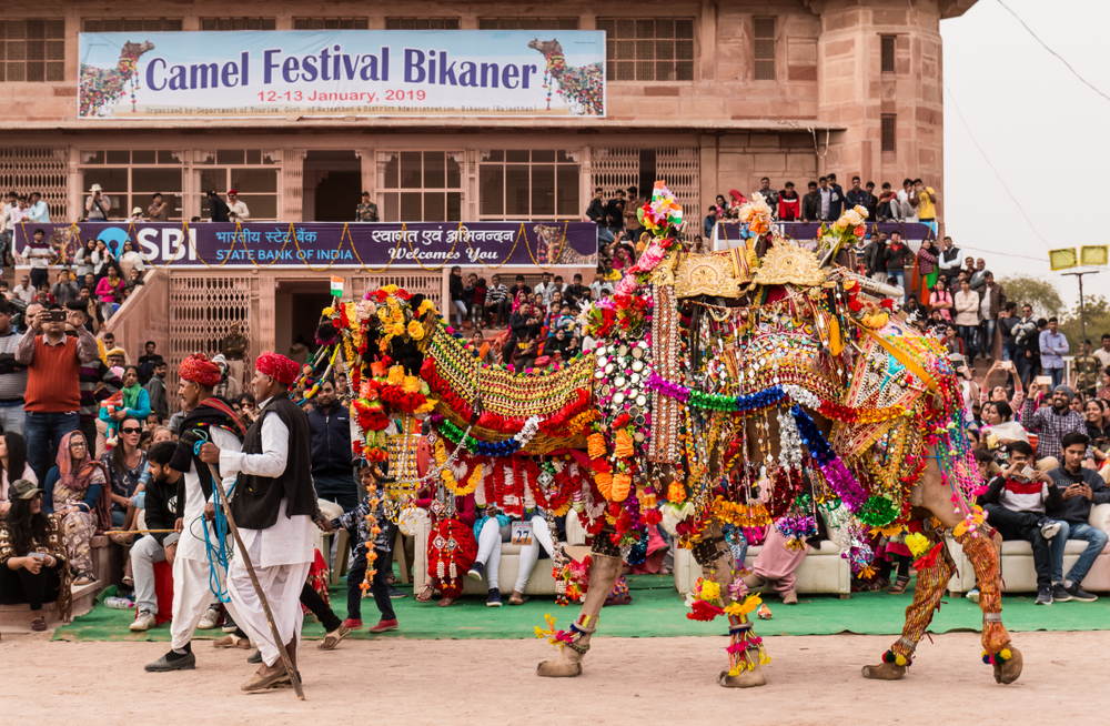 Decorated,Camel,On,Festival,Ground,To,Impress,The,Judges,At