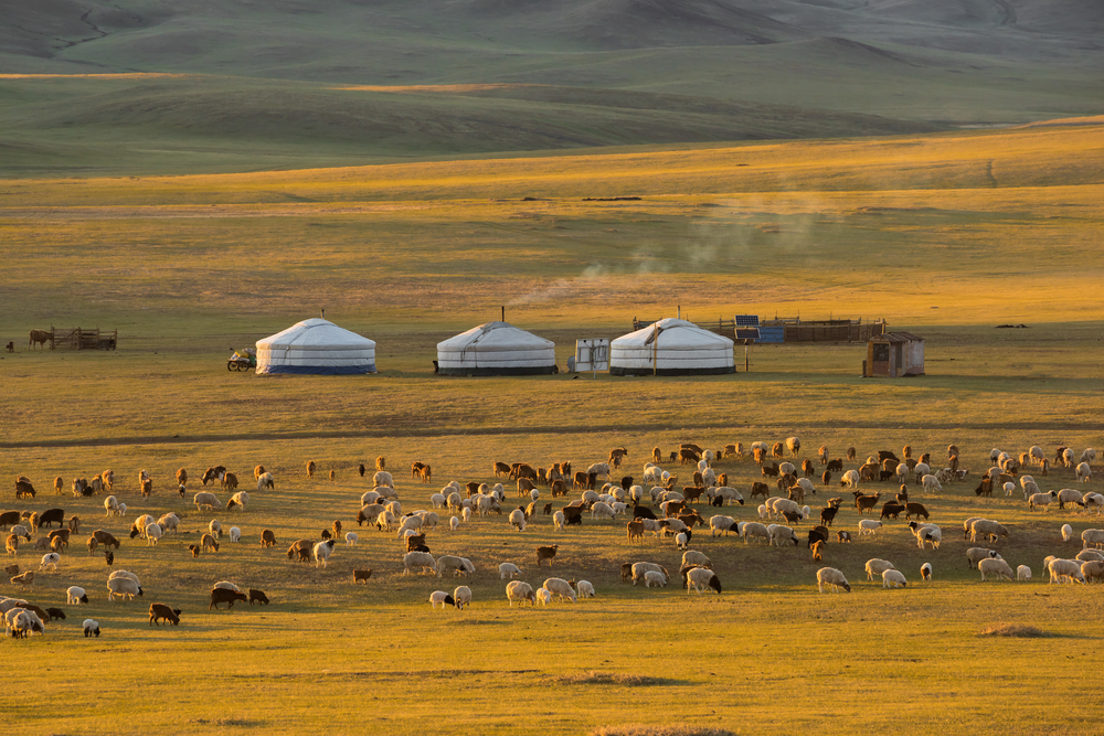 """ger"",Mongolia,Accommodation,And,Goat,Herd."