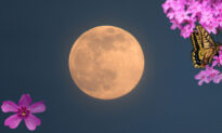 First Supermoon of 2021 Will Appear in Night Sky Monday, April 26–Here's What You Need to Know