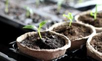 Growing Gardeners: Taking Care of Indoor Seedlings