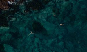 Australia Announces $100 Million Towards 'Blue Carbon' Ocean Ecosystems