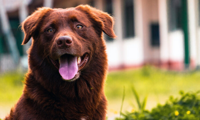 Most dogs are nearsighted, which means they see nearby objects clearly, but things in the distance are somewhat blurry. (Majid Nawaz/Shutterstock)