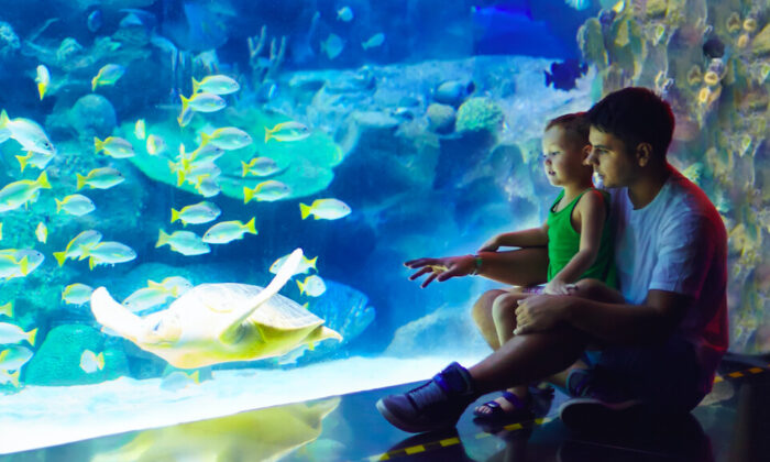 Taking kids to local attractions or museums is an inexpensive and educational way to spend a day. (Olesia Bilkei/Shutterstock)