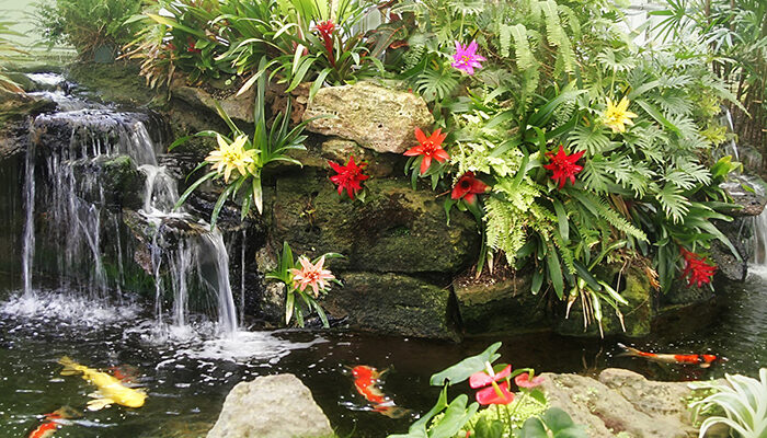 A Sherman Library and Gardens koi pond. The facility is hosting a virtual garden tour this year, which will include gardens from throughout Southern California. (Courtesy of The Sherman Library and Gardens)
