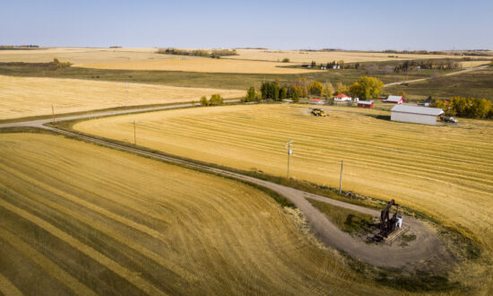 Rising Food Prices and Operating Costs Are Plenty for Farmers' Plate