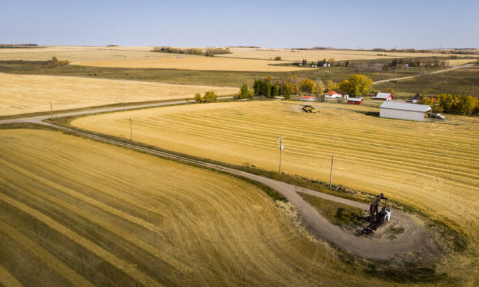 Members of the Reid family harvest their wheat crop near Cremona, Alta., on Oct. 1, 2020. Canada is the world's sixth-largest producer and one of the largest exporters of wheat, annually producing an average of over 25 million tonnes and exporting around 15 million tonnes. (The Canadian Press/Jeff McIntosh)