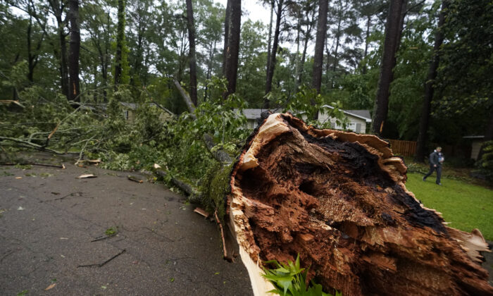 A resident walks by a wind ripped tree, in northeast Jackson, Miss., on May 4, 2021. (Rogelio V. Solis/AP Photo)