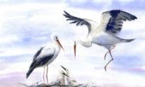 It's OK to Be Birdbrained