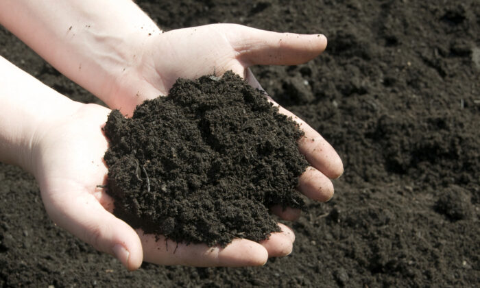 Loam soil, the ideal soil for growing plants, looks like chocolate cake when you dig up a shovelful. (Stacey Newman/Shutterstock)