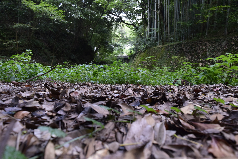 Green,Jungle,With,Dead,Leaves,On,The,Ground