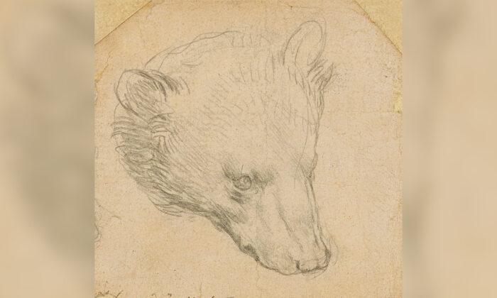 "Leonardo da Vinci's (1452-1519) ""Head of a bear"" drawing is seen in this undated handout image. (Copyright Christie's2021/Handout via Reuters)"