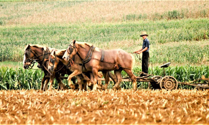An Amish boy plows a field with a team of horses instead of a tractor in Kent County, Delaware. (Courtesy of James Mattil/Dreamstime.com)