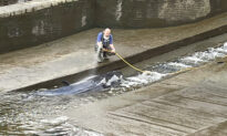 Small Whale Freed After Becoming Stranded Along River Thames
