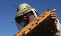 Council Nixes Neighborhood Beekeeping in Mission Viejo