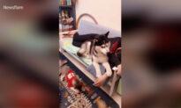Funny Fail Moments of Animals