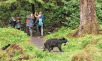 Photographers Miss Photo Opportunity of Bear Carrying a Fish as It Sneaks Past Behind Them