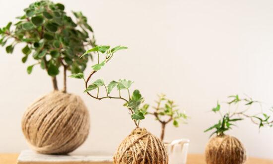 How to Make Kokedama, Japanese Moss Balls