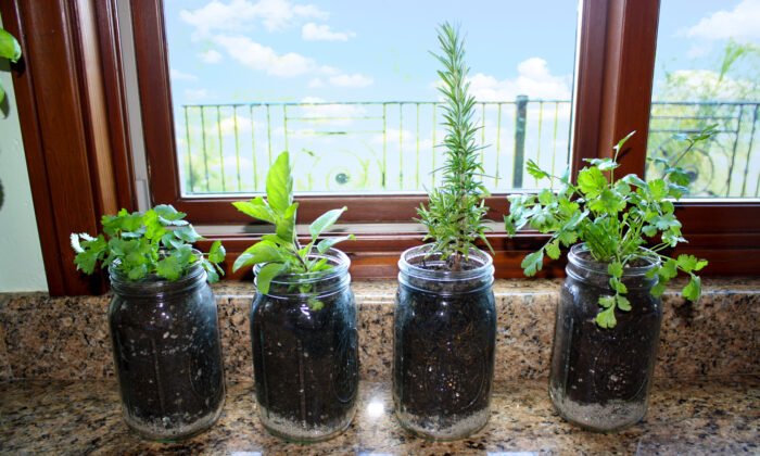 Plenty of sunlight will help your plants thrive, and give you fresh herbs for a long time. (Jeff Perkin)